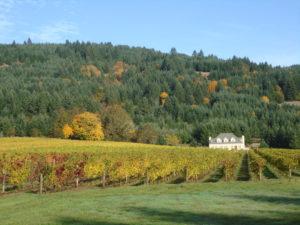 Cardwell Hill Vineyard